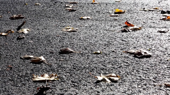 closeup of dried leaves blown on road