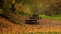 Benches in the woods