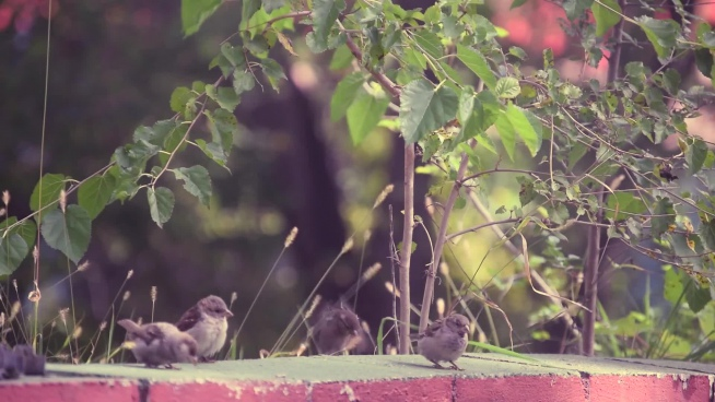 closeup of cute tiny birds playful in nature