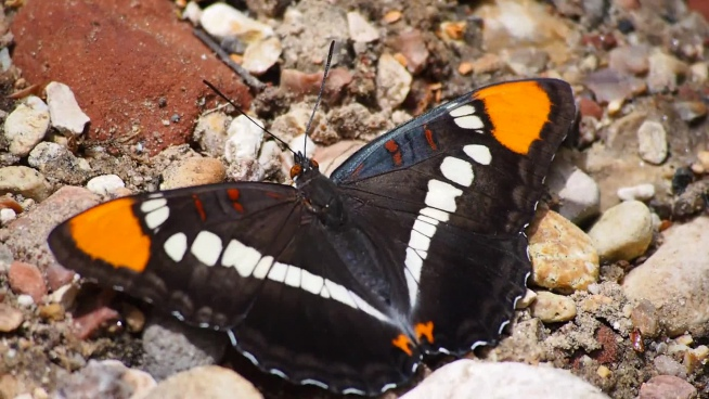 colorful butterfly moving on rocky ground