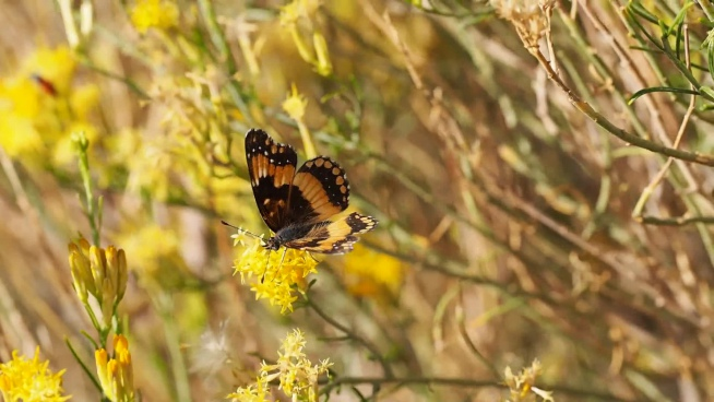beautiful fragile butterfly on yellow flowers