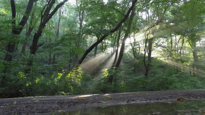 fast clip of sun rays motion in forest