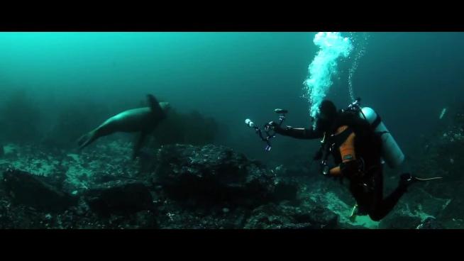 clip of diver exploring ocean life