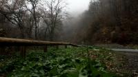 Foggy road timelapse