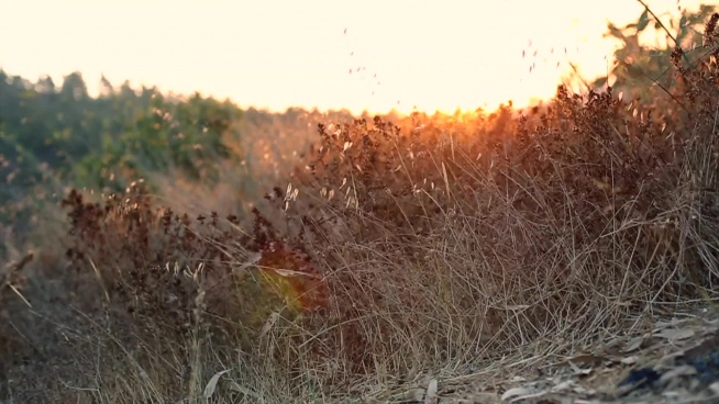 dried meadow at sunset