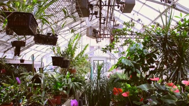 beautiful fresh plants in glass house