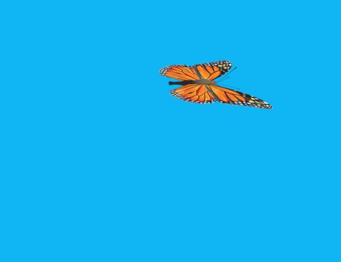 cartoon clip of colorful butterfly flying