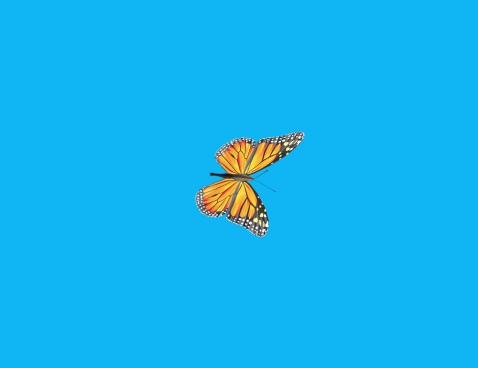 cartoon of butterfly flying on blue background