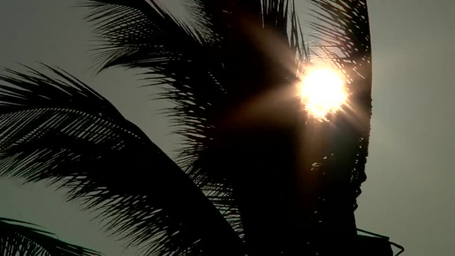 wild coconut trees swinging in wind