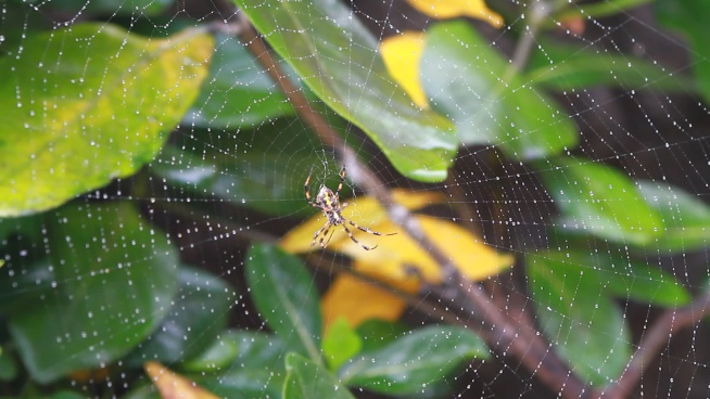 closeup of wild spider on web