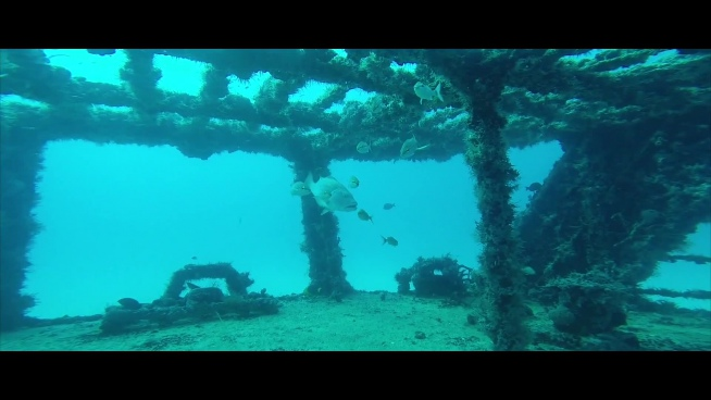 fishes swimming around wrecked ship in ocean