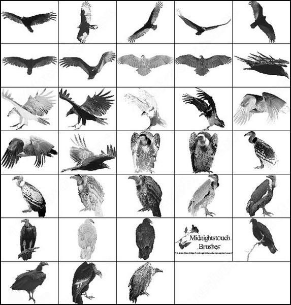 23 ps 7 vulture brush