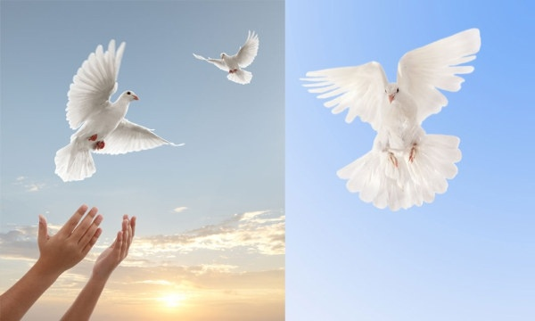 2 dove theme of highdefinition picture