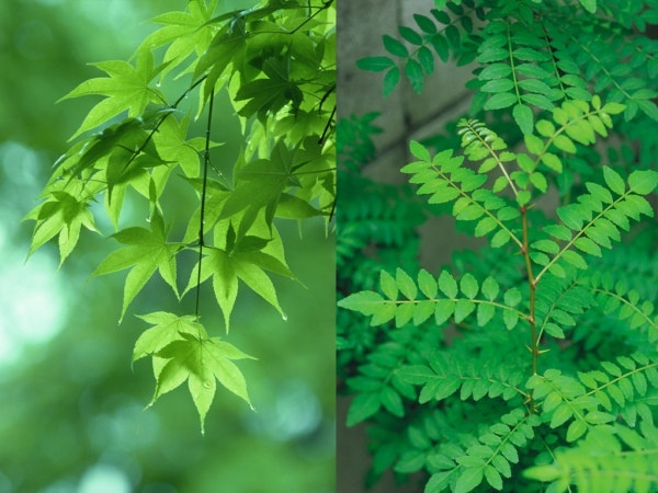 2 green ye gaoqing picture