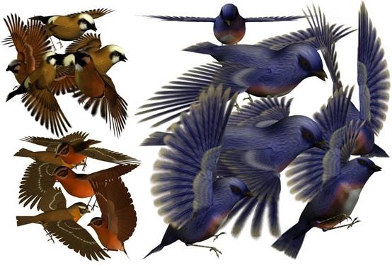 3d bird psd layered