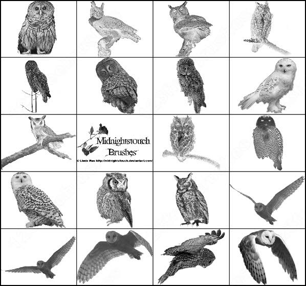 48 ps 7 owl brush