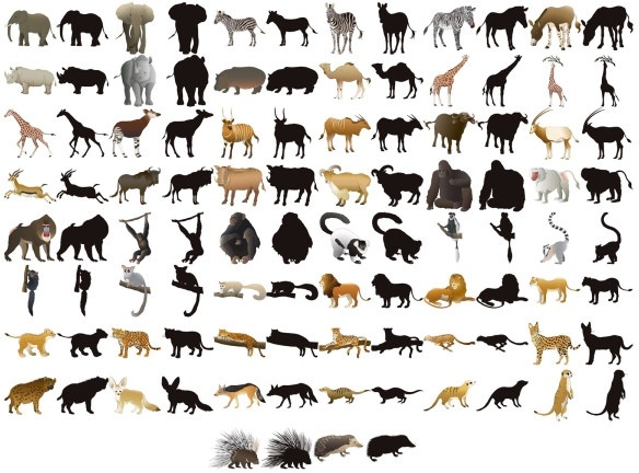 50 animal models and silhouette vector