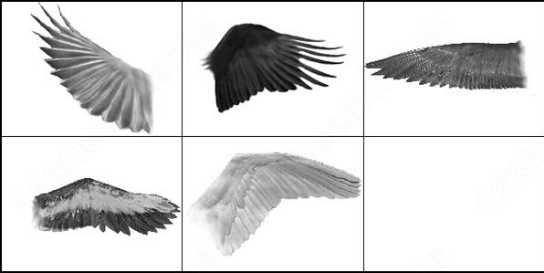 5 different wings photoshop cs2 brush