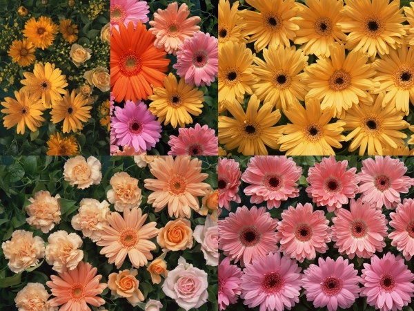 5 hd daisydefinition picture