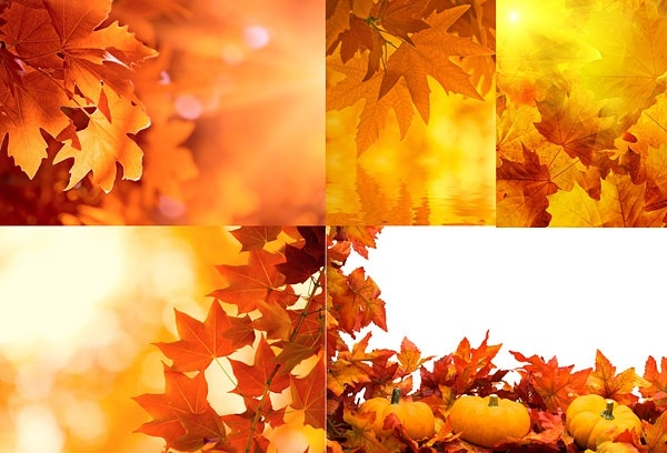 5 of autumn leaves highdefinition picture