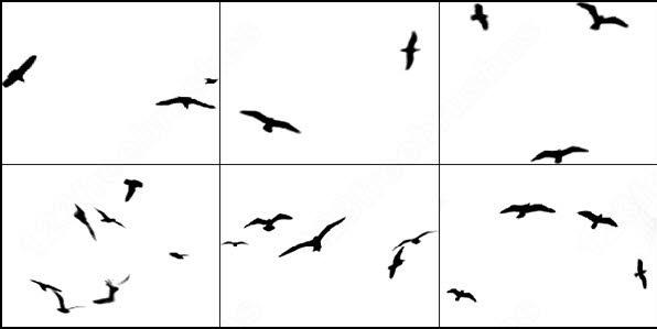 6 bird brush