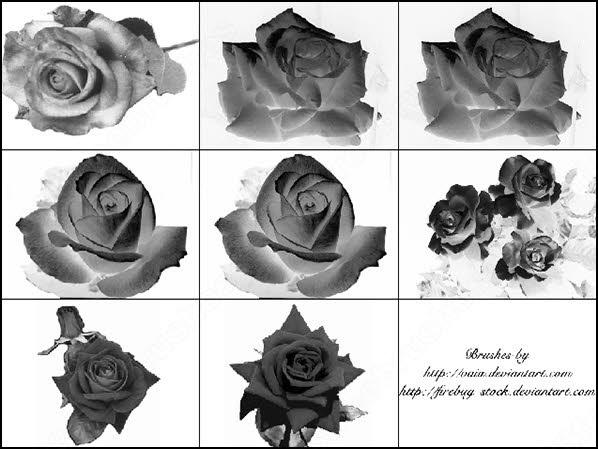 9 rose flower photoshop brush