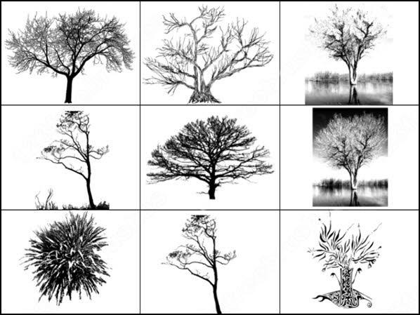 9 tree brush