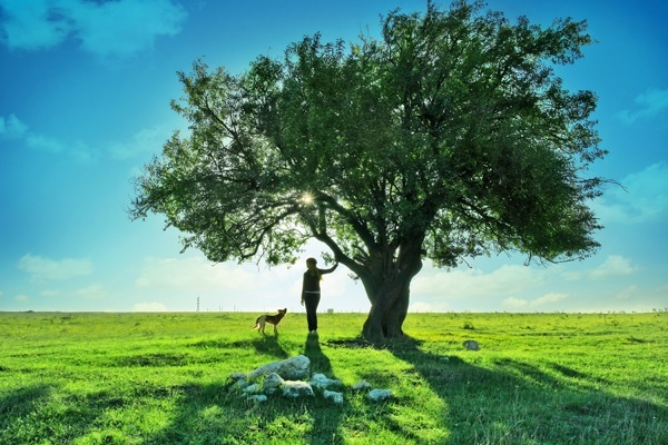 a big tree landscape scenery of highdefinition picture