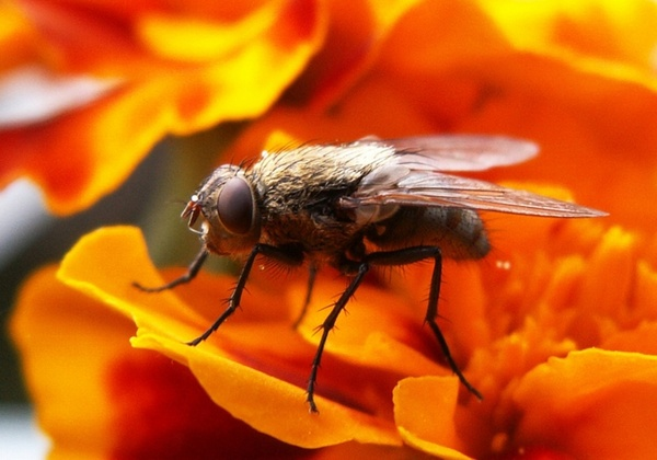 a fly insects fly