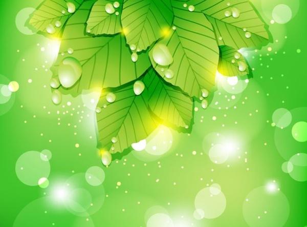 fresh nature background leaf icon green bokeh decor