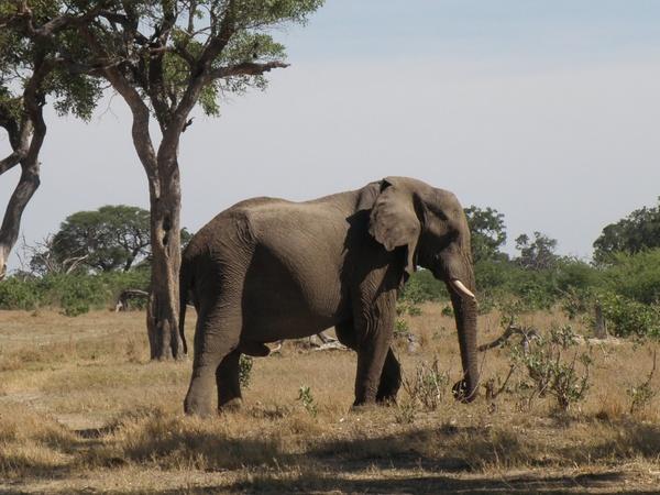 africa botswana animals