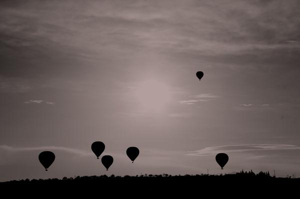 aircraft animal balloon bird evening flight fly