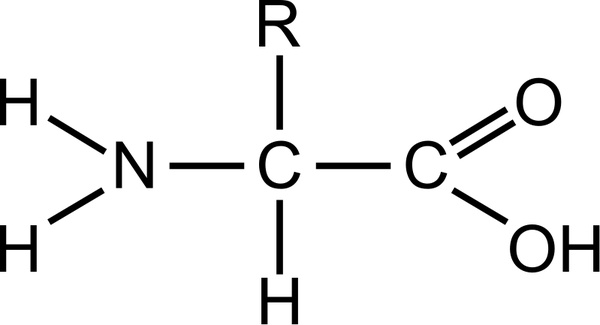 General Structure Of Amino Acids