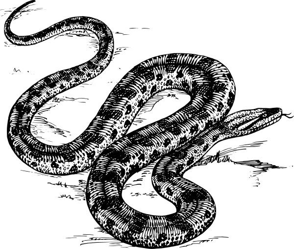 Anaconda Free Vector Download (2 Free Vector) For