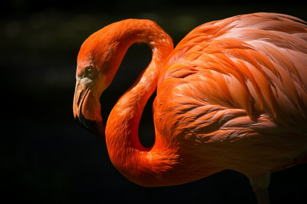 closeup of precious flamingo in nature