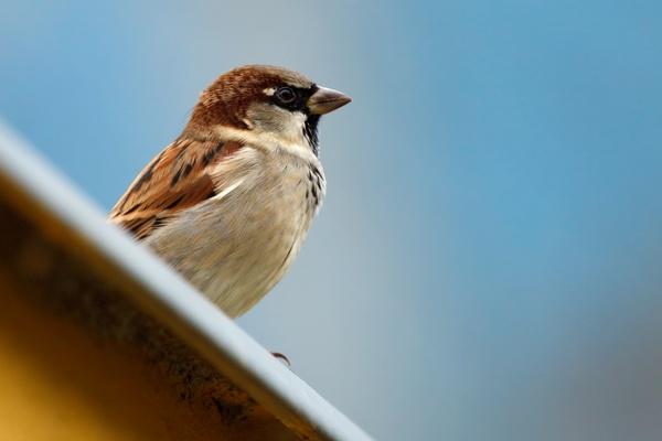 animal bird brown