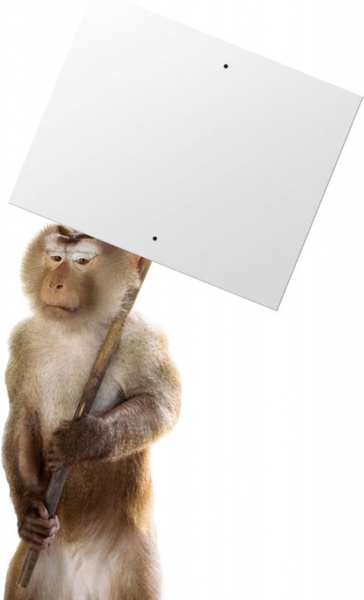 animals and billboard 03 hd picture