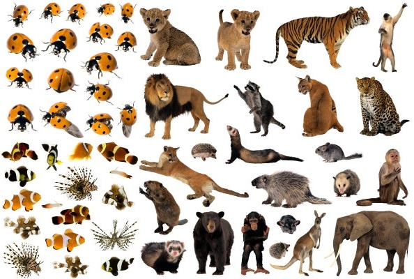 animal lion image free stock photos download  5 318 free Guess the Baby Food Clip Art Guess the Baby Food Clip Art