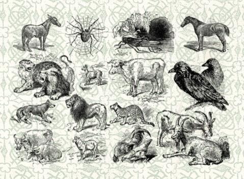Animals Vol. I