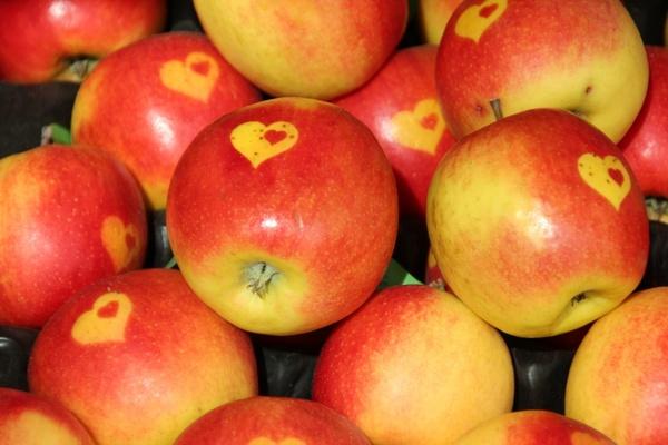 apple eat fruit