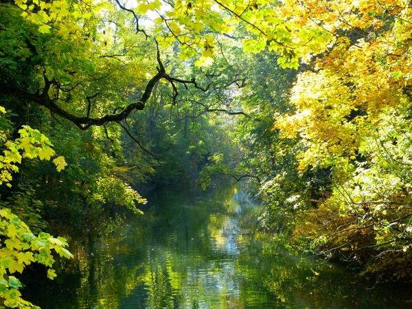 autumn autumn mood tree