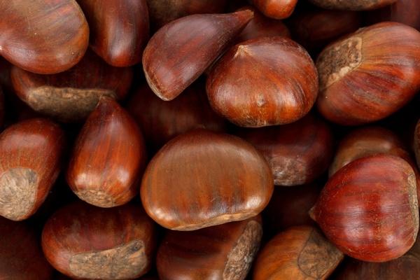 autumn background brown