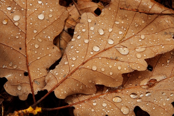 autumn brown detail