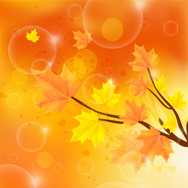 autumn color with tree branch and leaf background