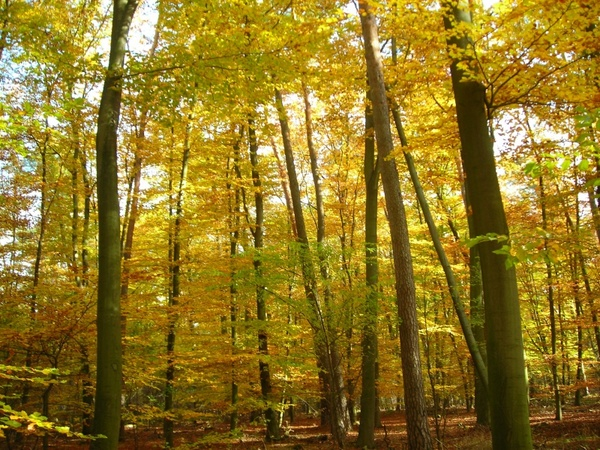 autumn forest emerge