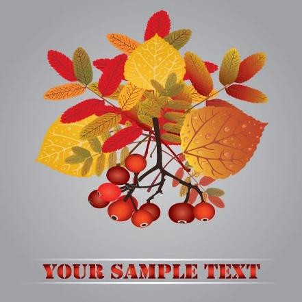 autumn fruit autumn leaves 01 vector