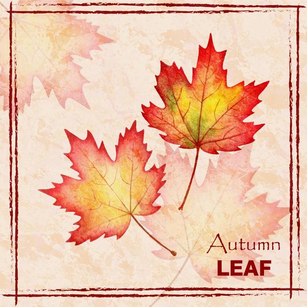 autumn leaf maple background