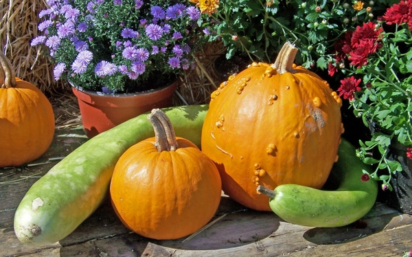 Pumpkin And Leaves Autumn Wallpaper Free Stock Photos Download 7 379 Free Stock Photos For Commercial Use Format Hd High Resolution Jpg Images