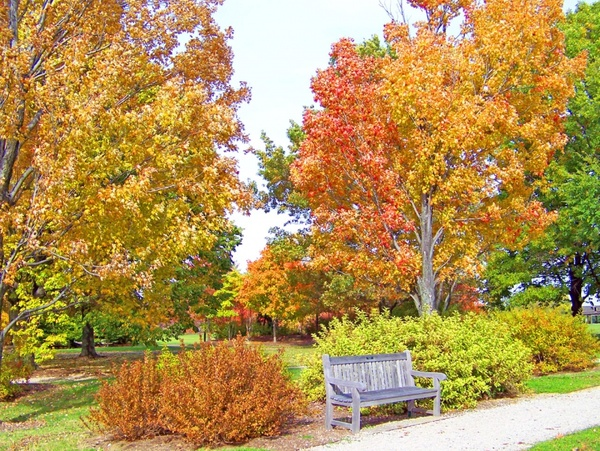 autumn trees and bench in a park