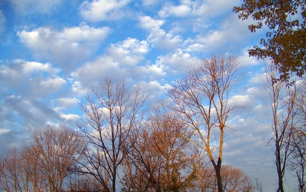 autumn trees and clouds 3